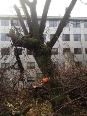 tagli alberi