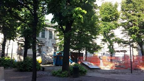 taglio alberi Benedetto Marcello