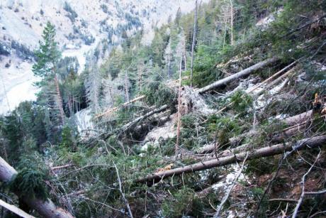 Le foreste dopo la tempesta1