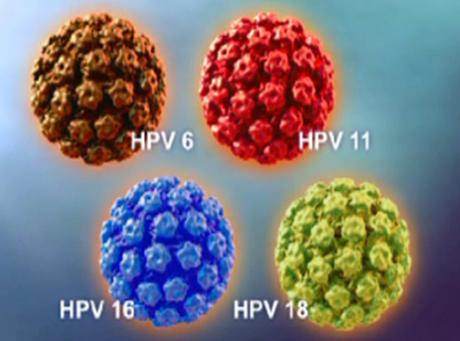 vaccino papilloma virus validita